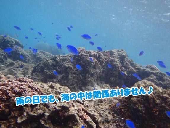 amenohi-diving