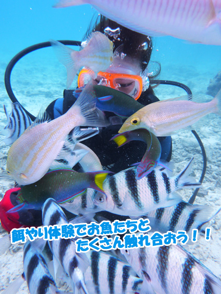 diving-sakana-esayari
