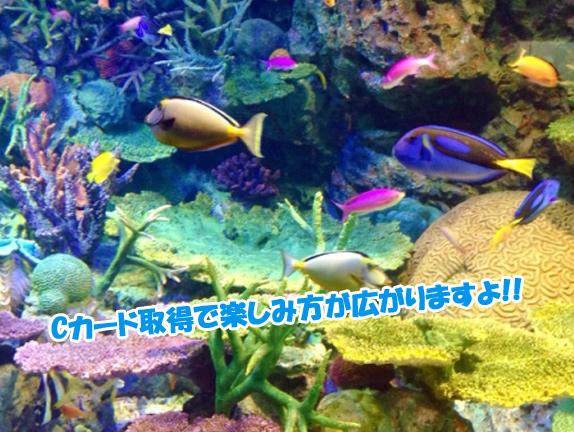 diving-tanoshimikata2