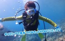 kodomo-diving