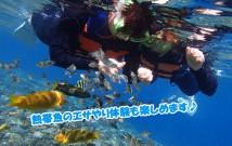 sunokel-fish