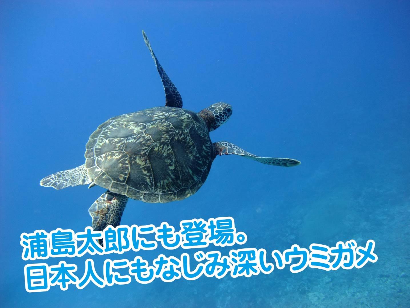 ウミガメ泳いでる-01