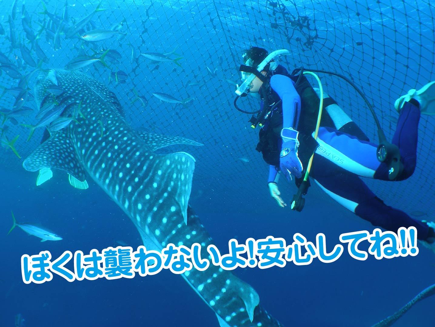 ジンベエザメは襲わない-01