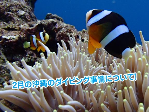 2gatu-okinawa-diving