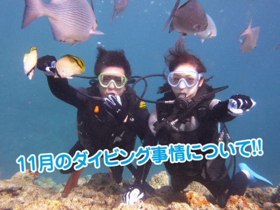 11月 海中 ダイビング