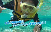 沖縄の海 シュノーケリング