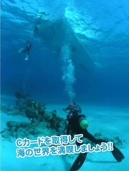 海中 ダイビング