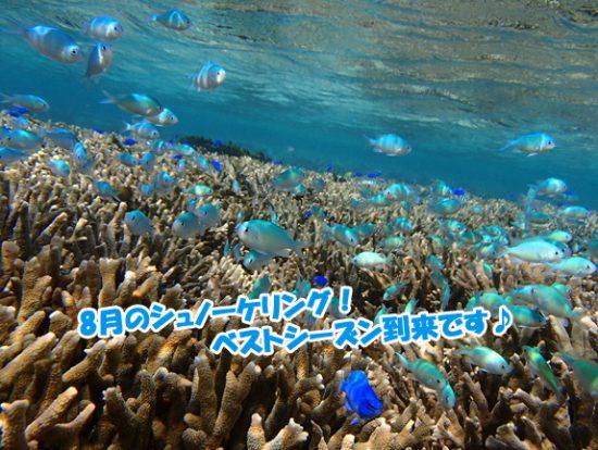 沖縄 海の中