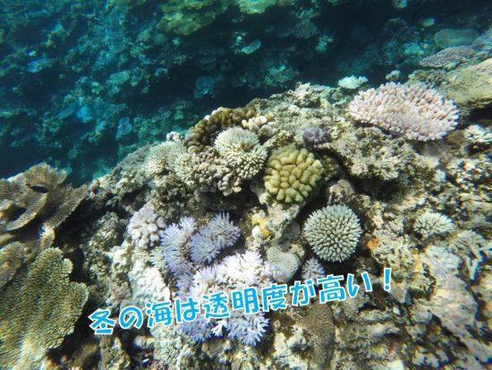 サンゴ 海