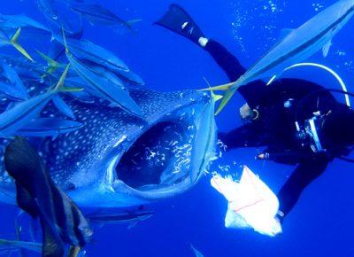 ジンベイザメ体験ダイビングツアー